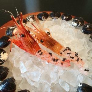 Noma por Rene Redzepi serve camarão japonês vivo servido com formigas, é um exemplo de insectos usados nos melhores restaurantes do Mundo.